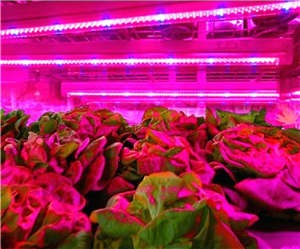 Vegetable Growth Supplementary Lighting