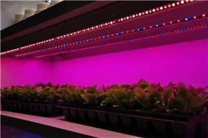 Vegetable Growth Supplementary Strip Lighting